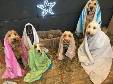 This Dog Nativity Scene Is Going Viral in the Best Way