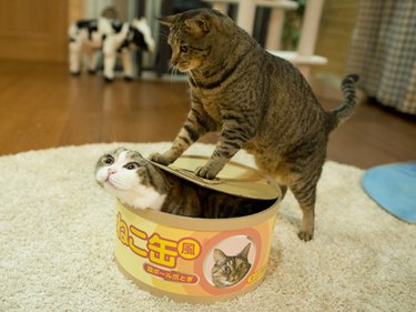Cat standing on box containing other cat