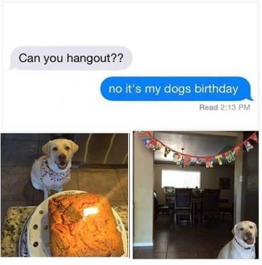 Pictures of dog's birthday party.