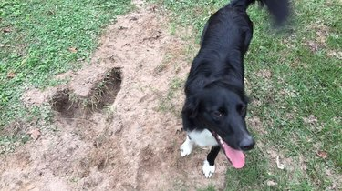 Dog standing next to heart-shaped hole.