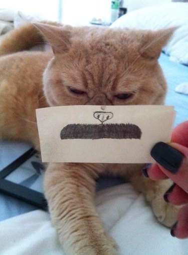 Be On The Look Out For These 19 Naughty Cats Who Were Purroled For Adorable Behavior