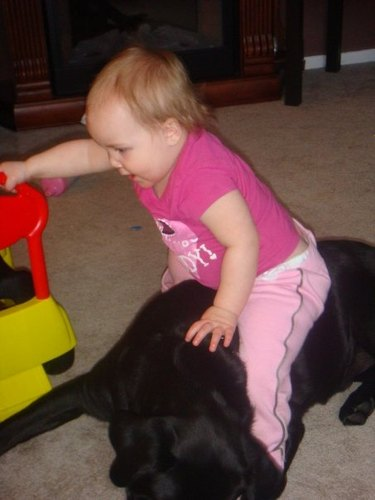 riding the puppy