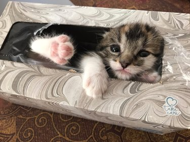 Missing kitten found sleeping in tissue box