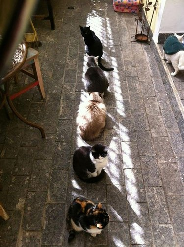 Row of cats in sunlight.