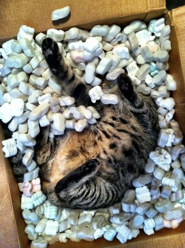 Cat playing in packing peanuts inside a cardboard box