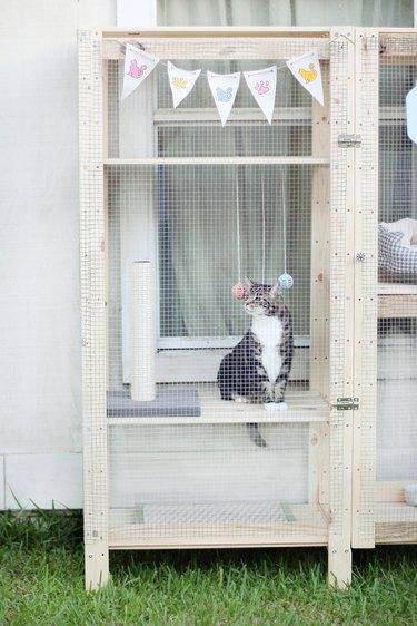 Cat sitting inside catio