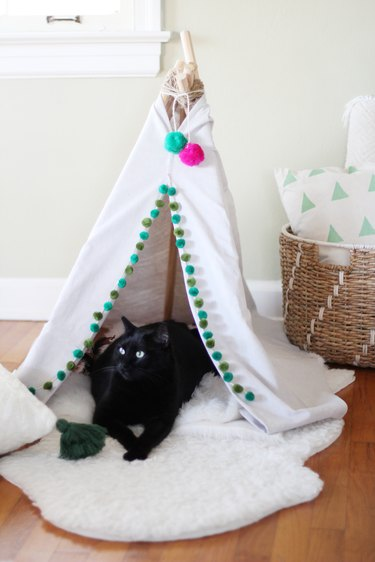 Cat laying in pet tent