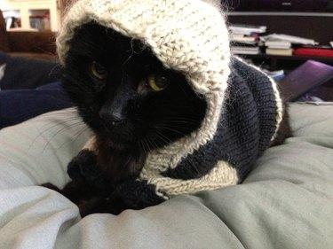 Black cat in hooded sweater.