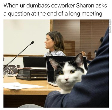 Cat in a conference room. Caption: When ur dumbass coworker Sharon asks a question at the end of a long meeting