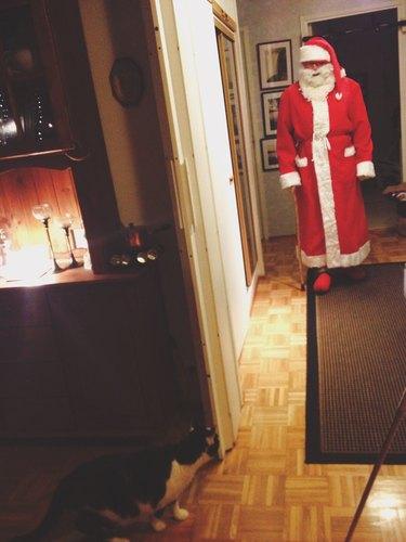 Cat sneaking up on Santa