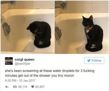 Cat yelling at water droplets in the tub