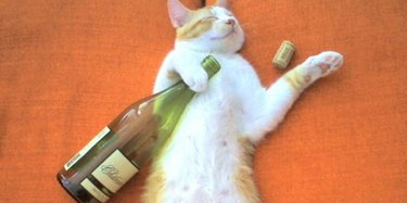 Cat asleep with a wine bottle