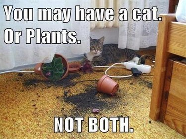 Cat next to broken flower pot. Caption: You may have a cat. Or plants. NOT BOTH.