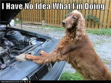 Dog looking into car engine.