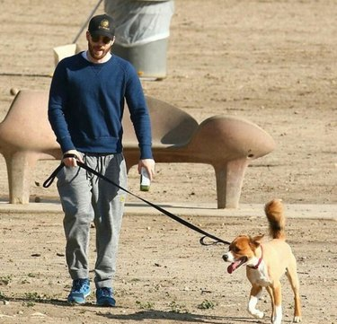 5 things you need to know about Chris Evans and his adopted dog, Dodger