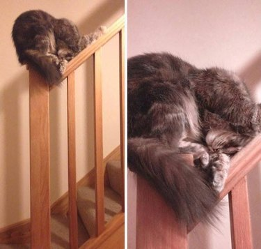 Cats Sleeping in Awkward Positions