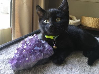 Black kitten with an amethyst