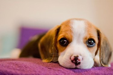 7 Top Mistakes People Make When Naming Their Pets