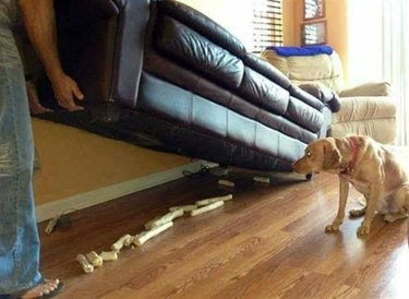 Just 17 Of The Most Absurd Pet Photos We've Ever Seen