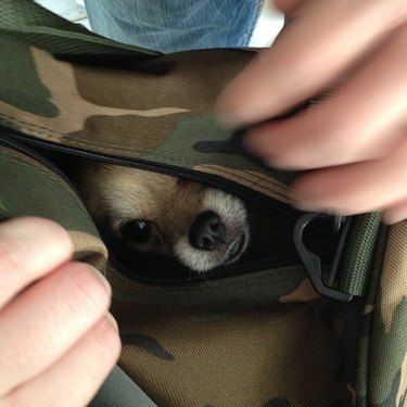 Puppy in camouflage bag