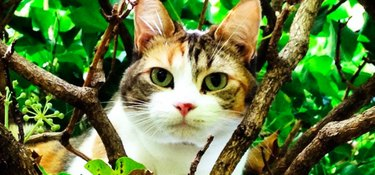 These Cat-Loving Rescuers Climb Into Trees To Save Stuck Kitties