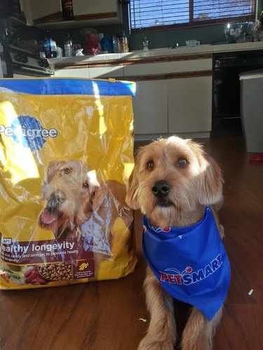 Dog sitting by a bag of dog food featuring a dog of the same breed