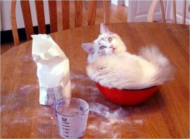 Baking Cat