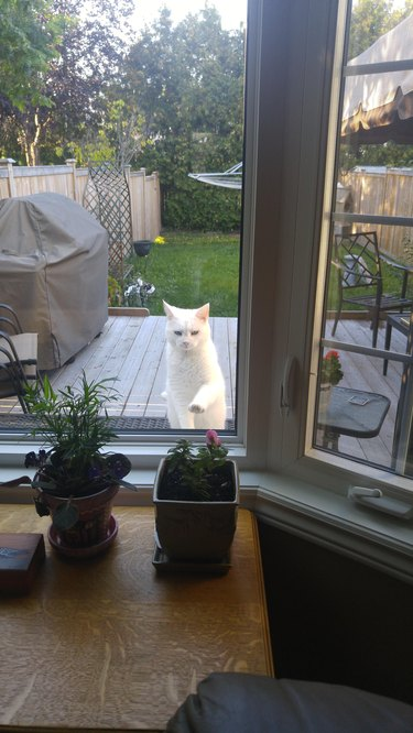 kitty longing through window
