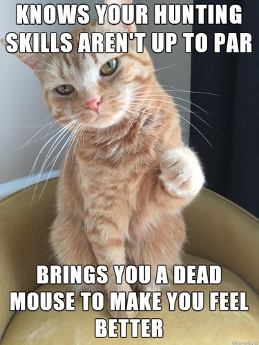 """Cat with caption: """"Knows your hunting skills aren't up to par. Brings you a dead mouse to make you feel better."""""""