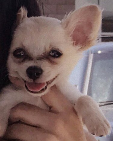 This Puppy Was Found Abandoned at the Airport After Its Owner Fled from an Abusive Relationship