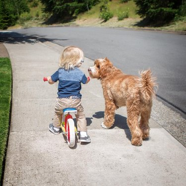 Reagan and Little Buddy walking and riding a bike