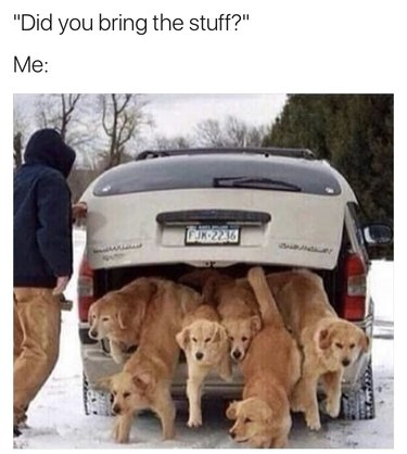 """Photo of six dogs jumping down from the back of a car. Caption: """"You got the stuff?"""""""