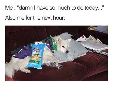 Dog lounging on couch with chips.