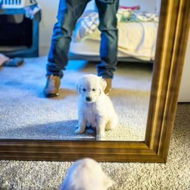 22 Adorable Puppies Doing Things For The First Time