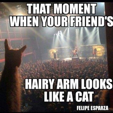 Arm that looks like cat