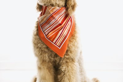How to Tie a Bandana on a Dog