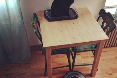 20 Cats Reacting Hilariously To Roombas & Robovacs