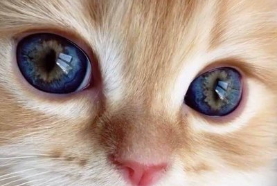 People Are Sharing Closeups Of Their Cat's Eyes And We Can't Stop Staring