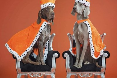 18 Dogs That Are Actually Royalty