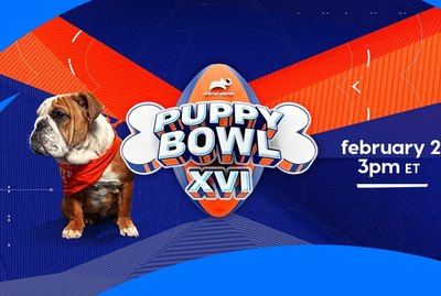 Stop Whatever You're Doing And Check Out The Lineups For Puppy Bowl XVI