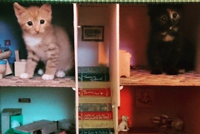 15 Adorable Pictures of Cats Inside Dollhouses