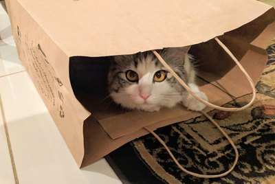 21 Cats Who Have Fallen For Humans' Clever Traps