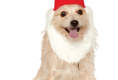 Cuteness Picks: 9 Of The Cutest Halloween Costumes You Can Buy For Your Pet Right Now