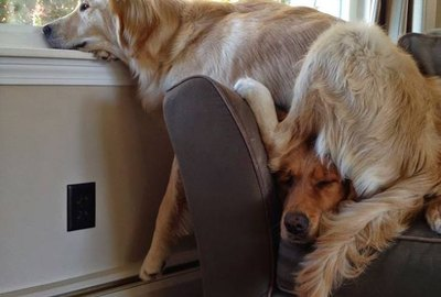 21 Examples of Dogs Being The Best