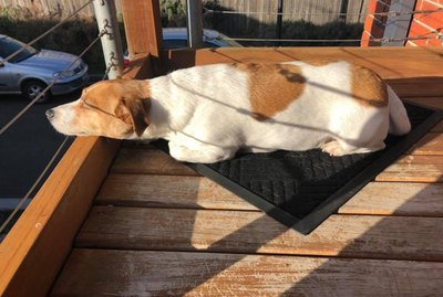 18 Dogs Who Prove Sun Beams Aren't Just For Cats