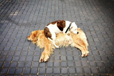 Just 18 Dogs Using Other Dogs as Pillows