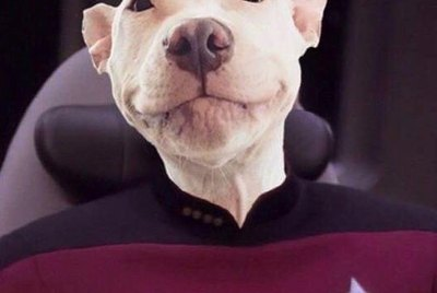 146 Star Trek-Inspired Dog Names