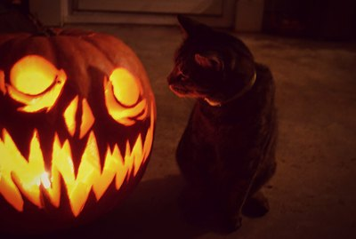 20 Spooky And Adorable Pets