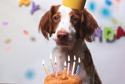 18 Dogs Celebrating Their Birthdays