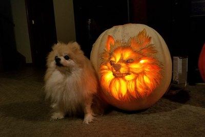 17 Coolest Pumpkins Carved Like Animals